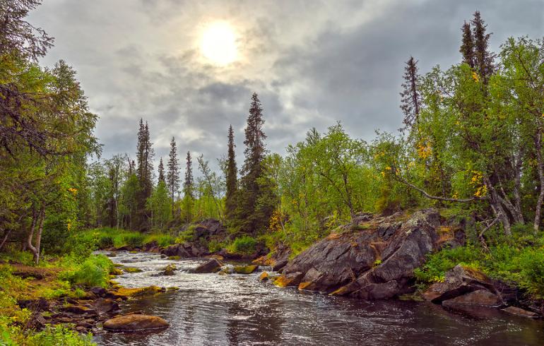 Самые живописные леса Подмосковья