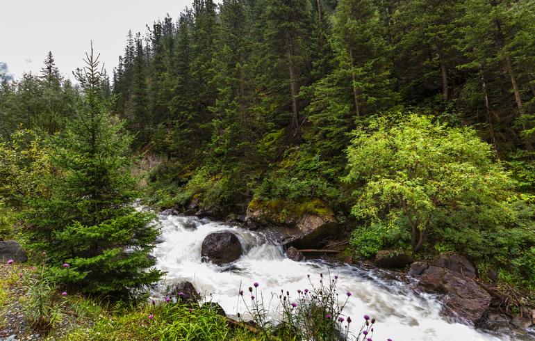 Государственный природный заказник «Арюшина гора»