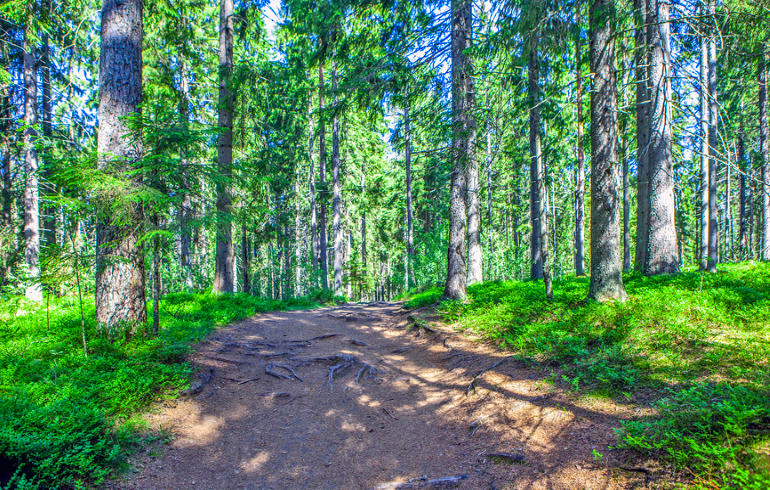 Черустинский лес
