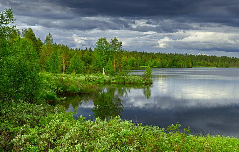 Национальный парк «Завидово»