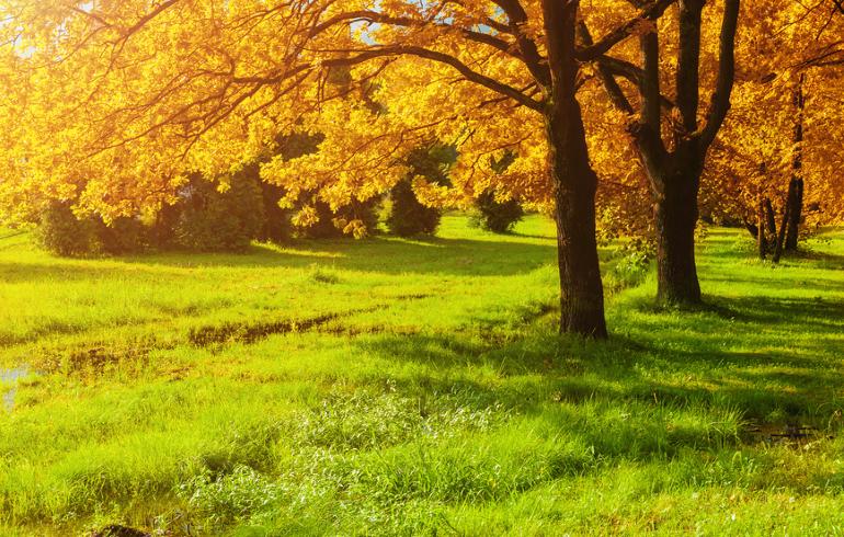 Государственный природный заказник «Дубровицкий лес»