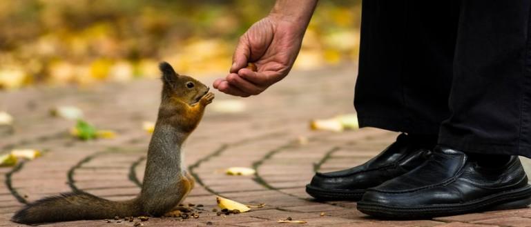 Наедине с природой: места, в которых можно пообщаться с животными