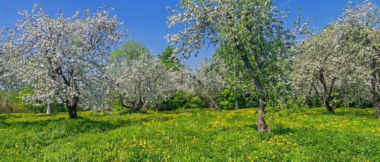 Пешеходная экскурсия по музею–заповеднику Коломенское. Цветущий яблоневый сад